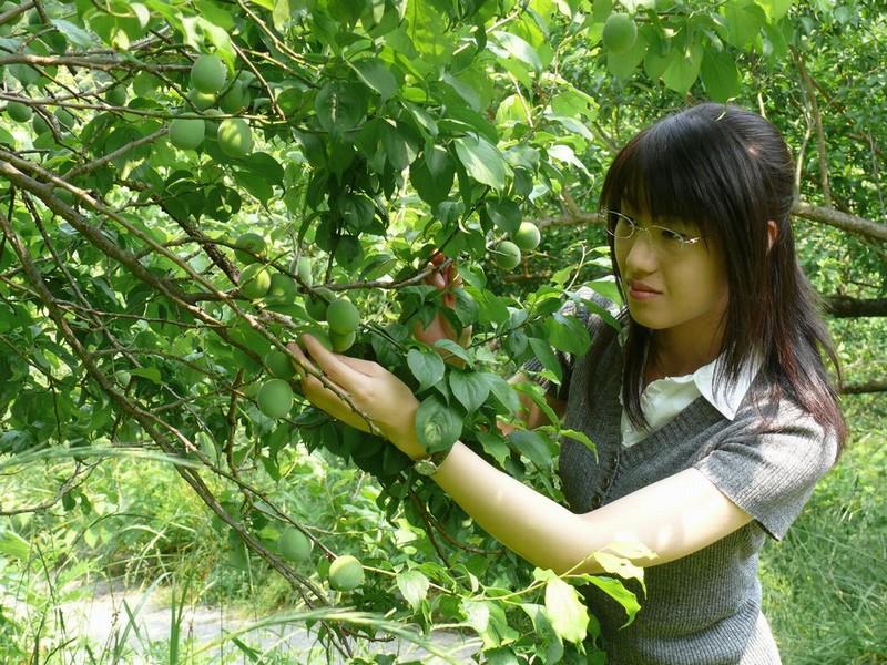本沢梅園「梅もぎ取り」