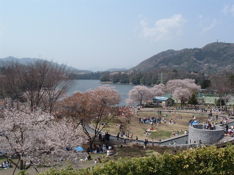 里の交流祭〜津久井湖さくらまつり〜