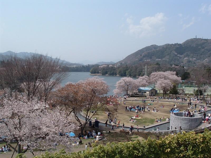 津久井湖さくらまつり(水の苑地)