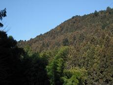 底沢のスギ、ヒノキ林のタイトル画像