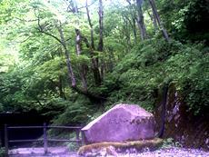 県民手づくりの森