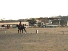 町田乗馬センター