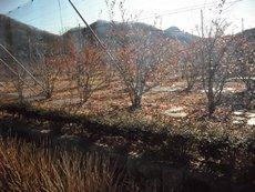 ぶるべの樹のタイトル画像