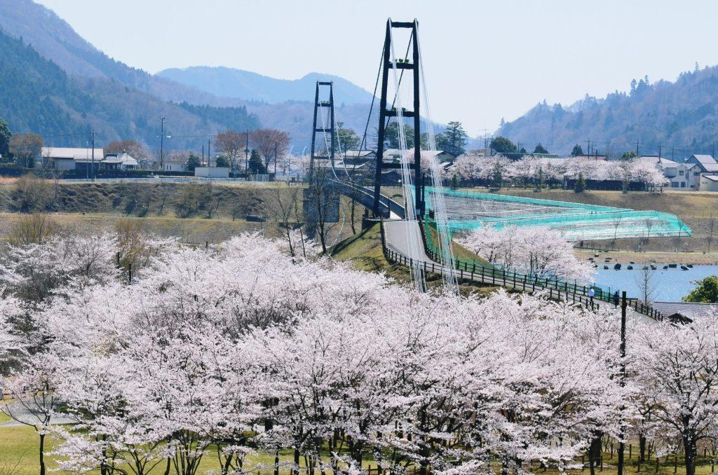 「宮ヶ瀬ダム 桜」の画像検索結果