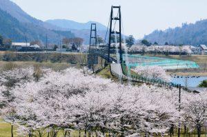 宮ヶ瀬桜まつり
