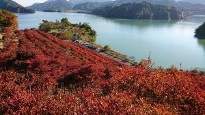 やまなみ五湖の紅葉風景 第2弾の写真