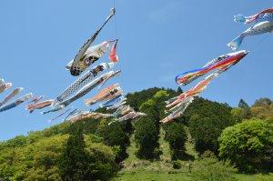こいこい祭り〜和田の里交流祭〜のタイトル画像