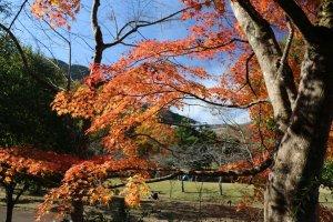 丹沢湖の紅葉はまだまだ綺麗!の写真