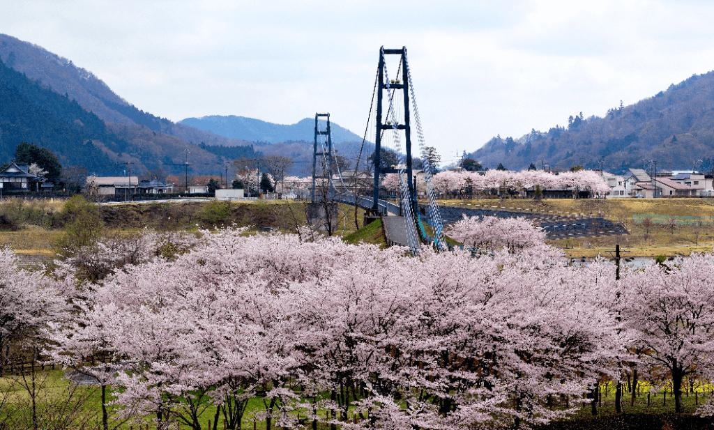 第14回宮ヶ瀬桜まつり