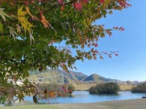 秋晴れの紅葉散策in宮ヶ瀬湖🍁の写真